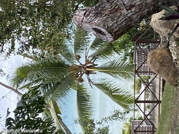 Traveller picture - Grand Palladium Jamaica Resort And Spa