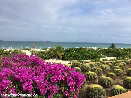 Traveller picture - Secrets Playa Mujeres Golf And Spa Rst