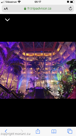 Traveller picture - The Pyramid At Grand Oasis