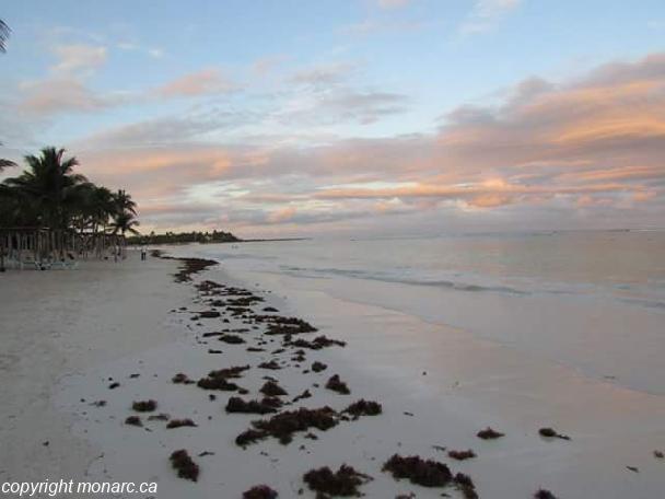 Reviews for Akumal Bay Beach And Wellness Resort, Riviera Maya ...