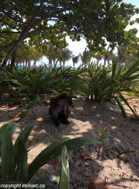 Traveller picture - Sandos Playacar