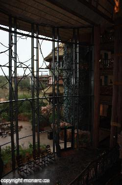 Traveller picture - Disneys Animal Kingdom Lodge