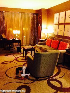 Traveller picture - Delano Las Vegas