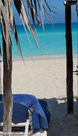 Traveller picture - Melia Las Dunas